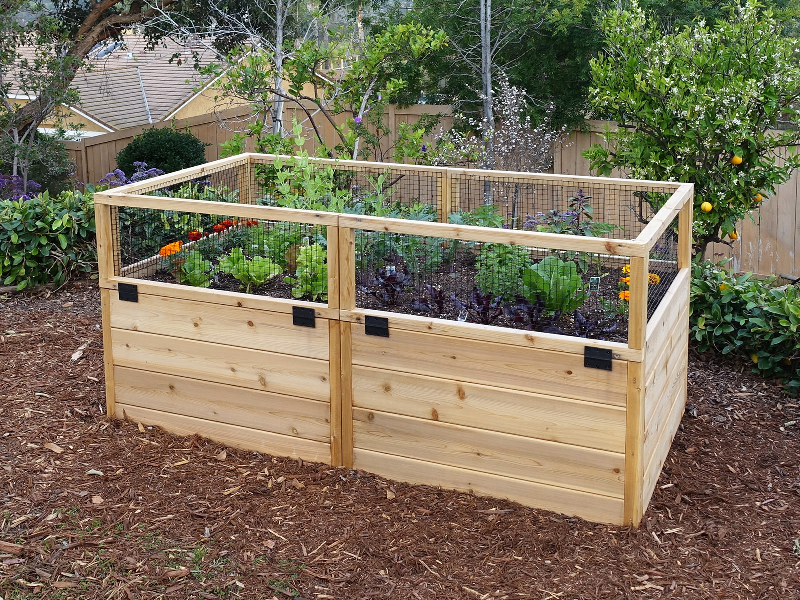 3 X6 Raised Garden With Hinged Fencing Gardens To Gro